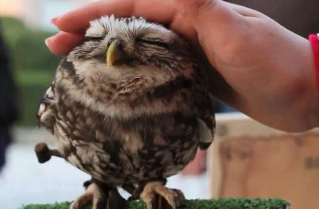 what is the dream in the hands of an owl