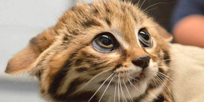 перевод человеческого языка на кошачий