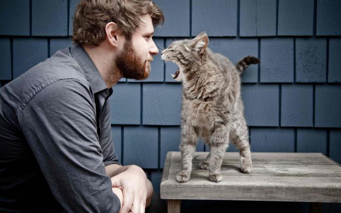 кошачий язык слова