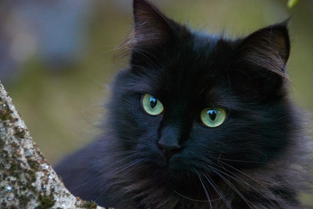 переводчик кошачьего языка