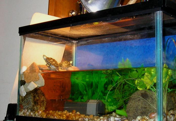 террариумы для красноухих черепах