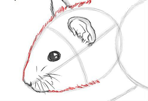 how to draw a hamster step by step for beginners