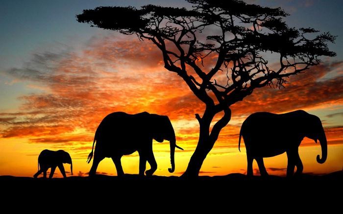 заставка на телефон слоны № 57342 загрузить
