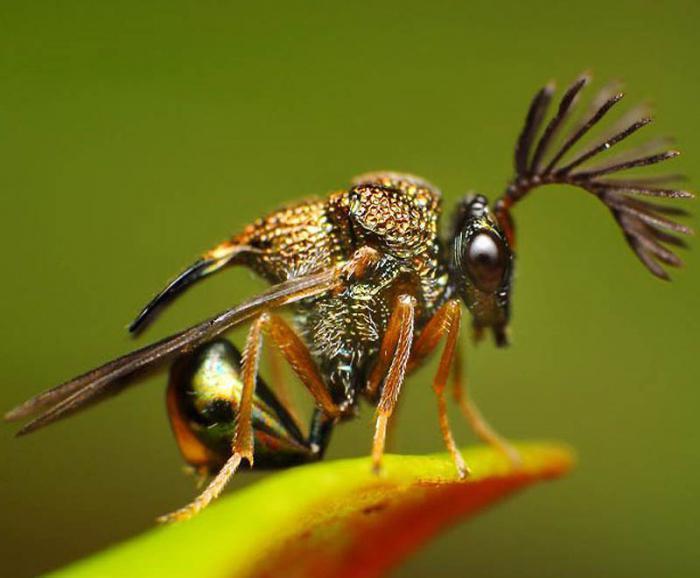 Сонник насекомые в теле