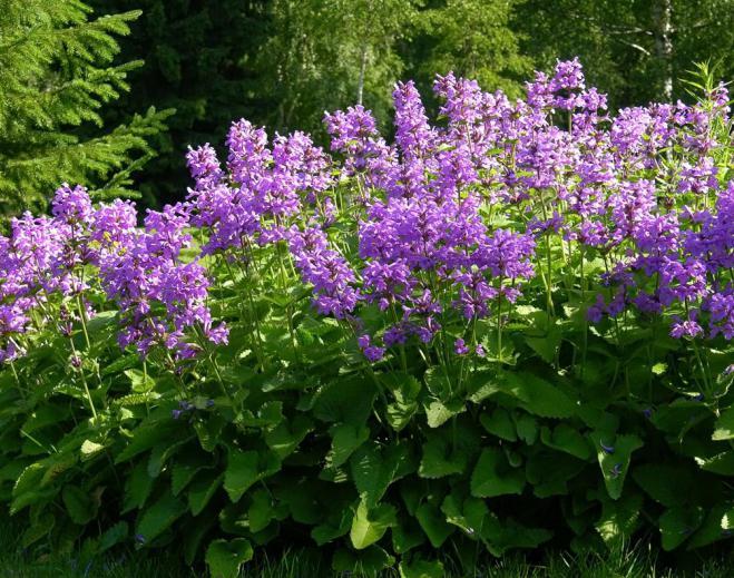 herb initial medicinal use [