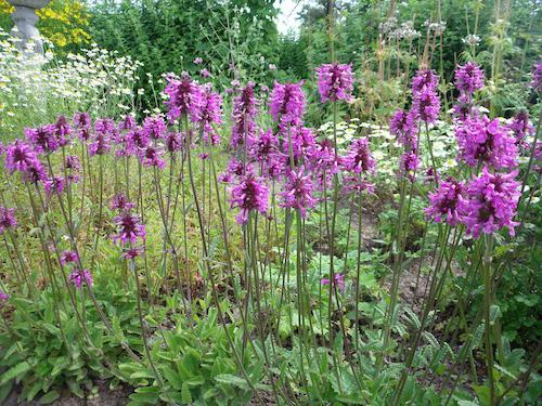 plant initial medicinal [