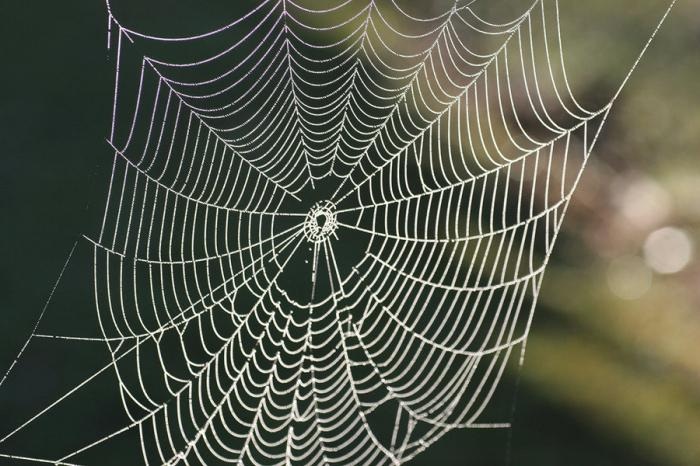 why dream of a web