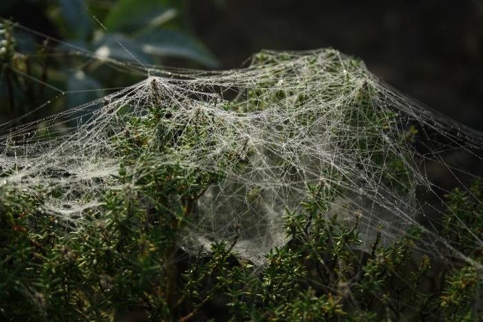 к чему сниться много паутины