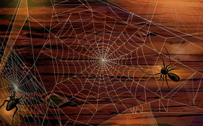 what dream big web