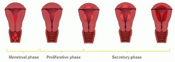 Болит в паху с правой стороны у женщин