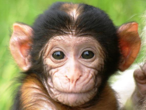 Сонник секс с обезьяной
