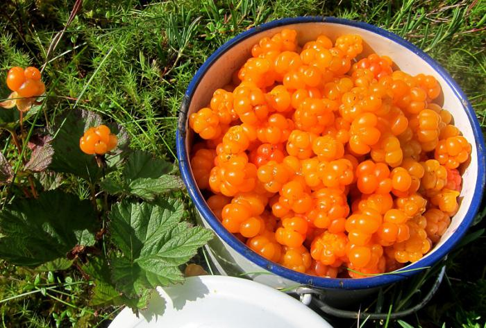 cloudberry berry when to collect