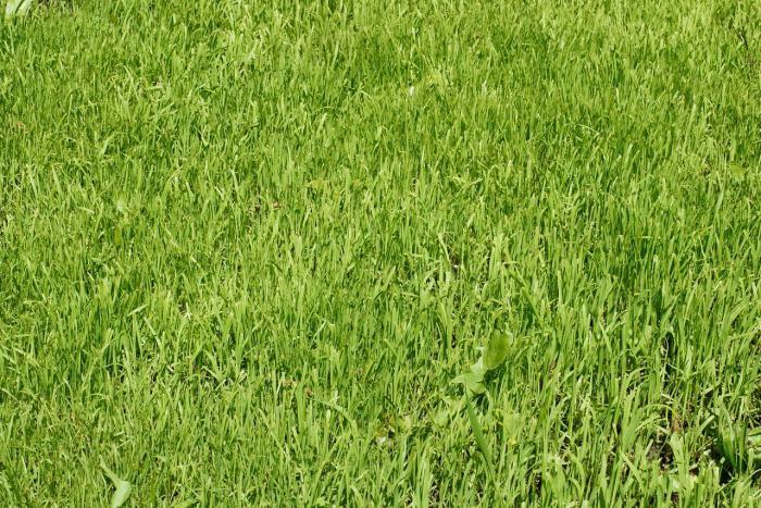 bluegrass meadow description