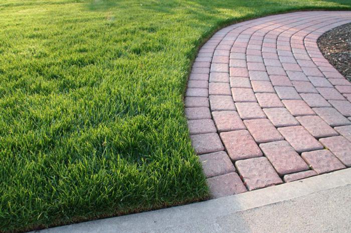 grass bluegrass for lawn