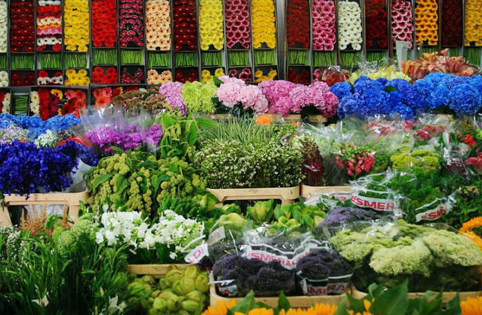 Мир цветов официальный сайт 49