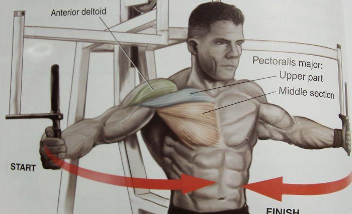 Упражнения для ног топ30 для тренировок в зале и