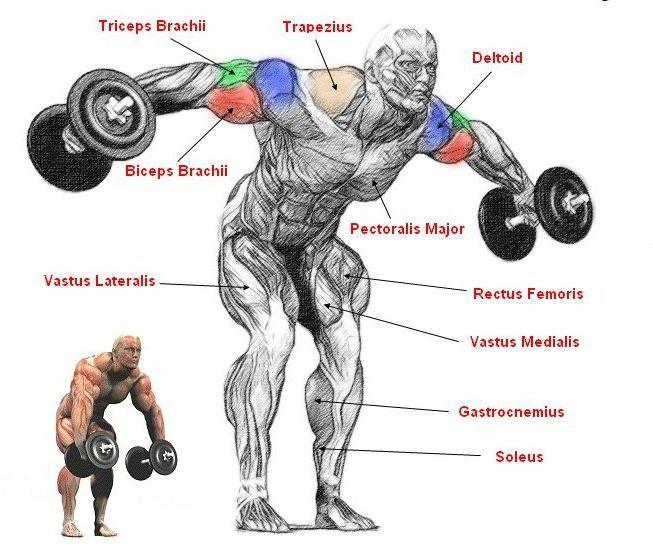 Эффективные упражнения на плечи с гантелями