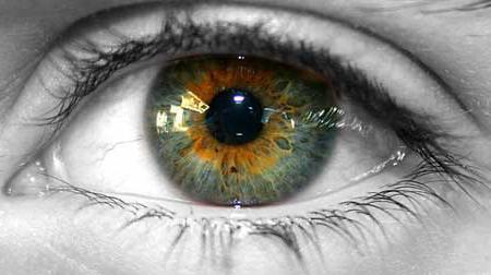 Цвет глаз болотный характер