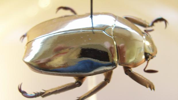 К чему снится жук? Толкование снов