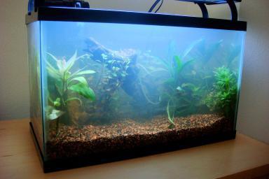 aquarium for beginners