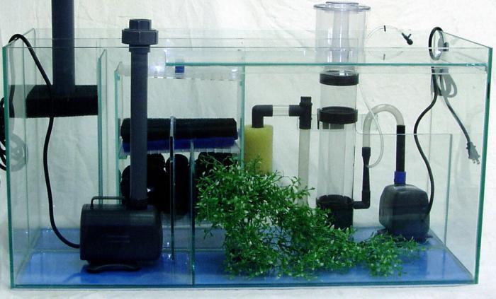 green water in the aquarium