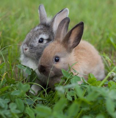 уход за кроликами в домашних условиях размножение