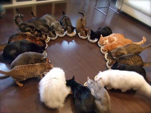 К чему снится много кошек? Сонник: толкование снов
