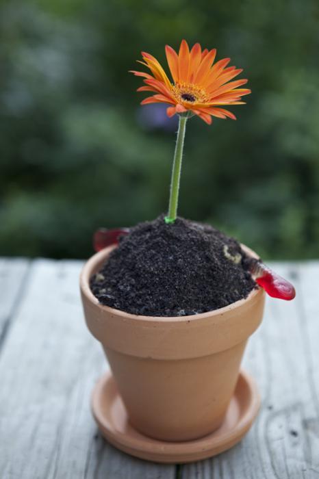 цветочный бизнес выгодно ли
