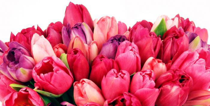 цветочный бизнес с нуля отзывы