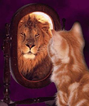 what is vanity