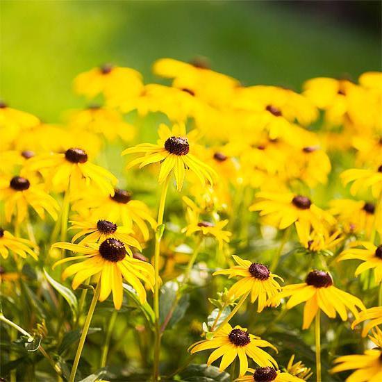 садовые фото название цветы желтые