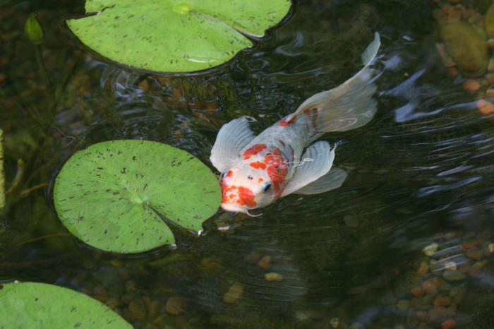 live fish food