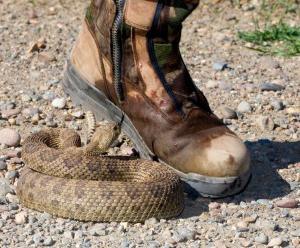Много змей под ногами