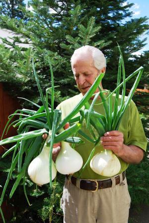 Як виростити цибулю