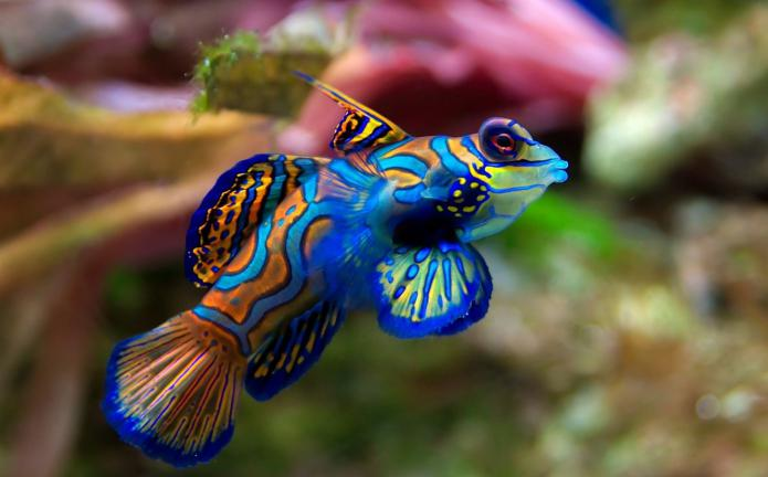 catch fish in a dream