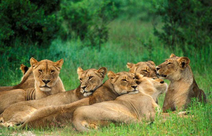 прайд львов фото