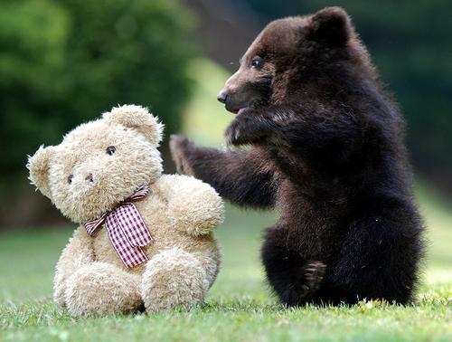 сонник медвежата