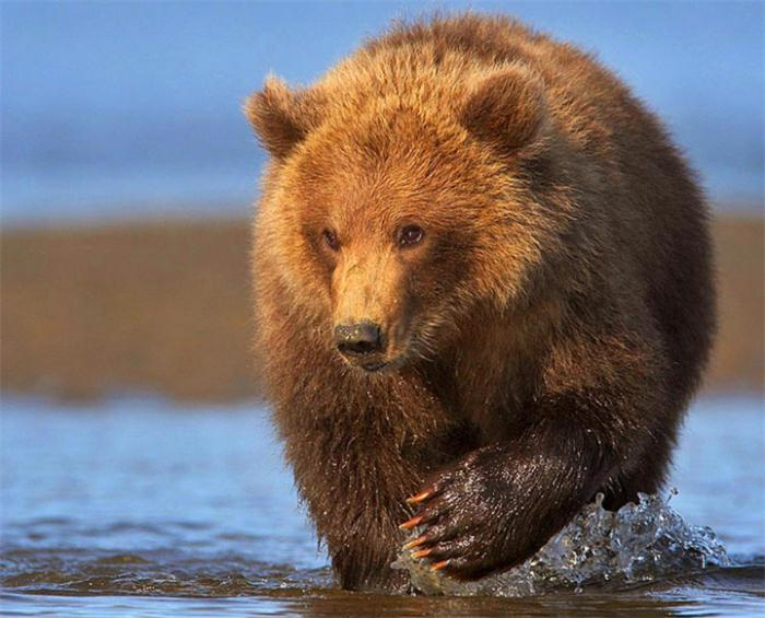 медведь во сне толкование