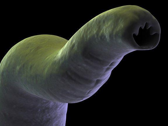 глисты в печени человека симптомы лечение фото