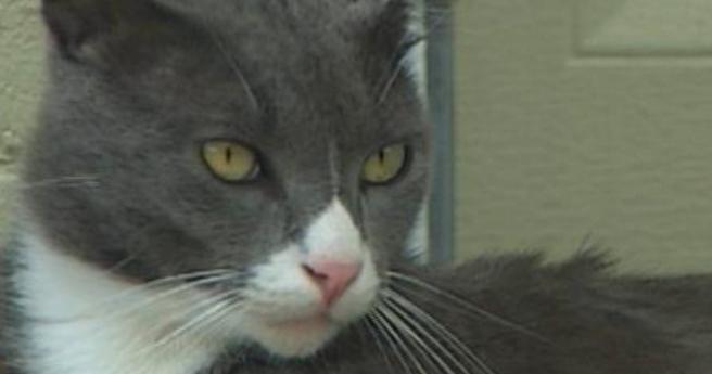 как выглядит чесотка у кошек