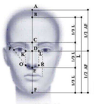идеальные пропорции лица