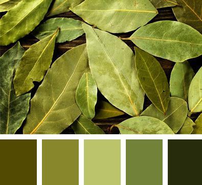с чем сочетается болотный цвет в одежде фото