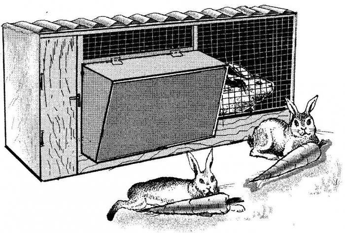 Как сделать крольчатник своими руками фото 917