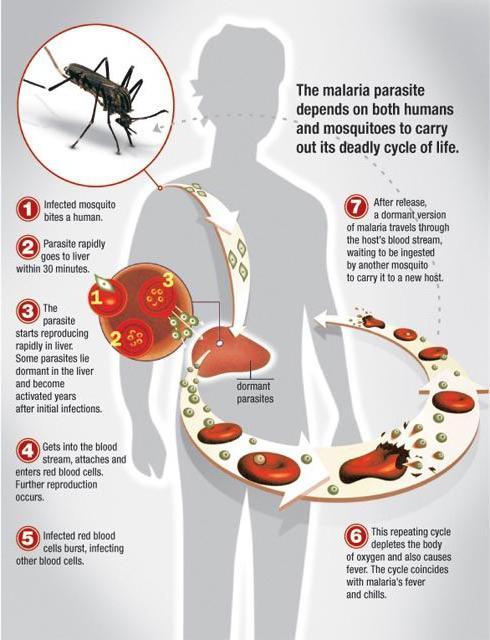 Определение понятия инфекционный процесс 12
