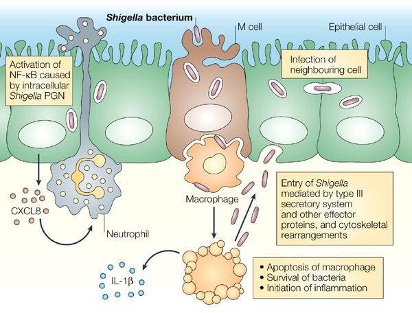Определение понятия инфекционный процесс 10