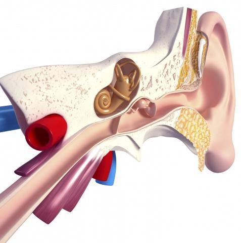 воспаляется ухо симптомы какой болезни: