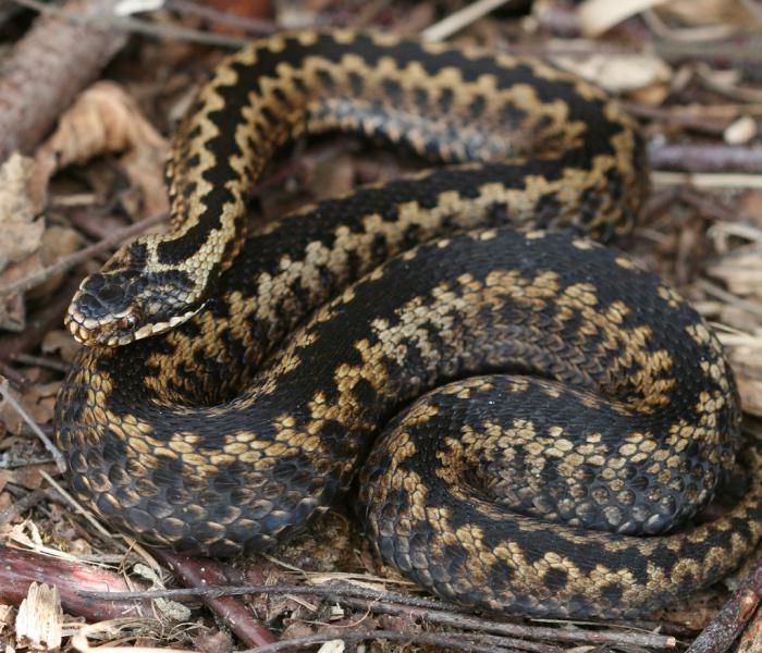 Какие виды змей бывают - 1b5