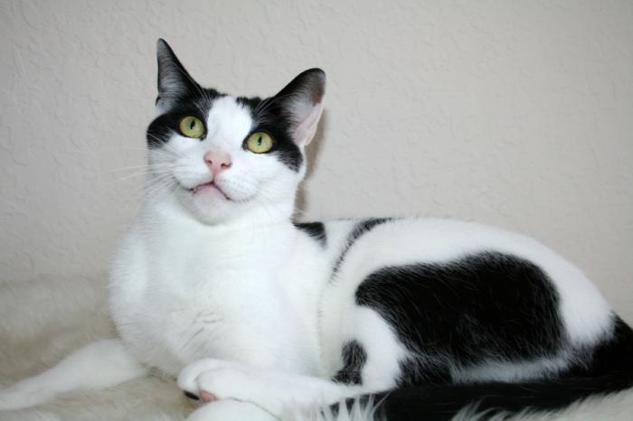 лекарство от глистов для кошек альбендазол