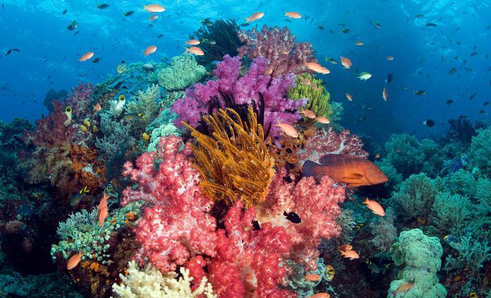 corals stones