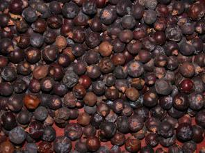 juniper berries medicinal properties and contraindications